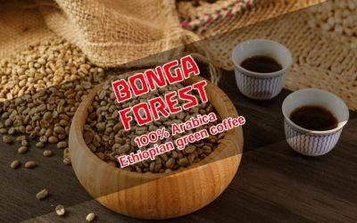 Bonga Forest – die Spezialität aus dem Regenwald Äthiopiens
