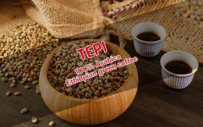 Tepi Kaffee – der Unbekannte Spezialitätenkaffee aus Äthiopien